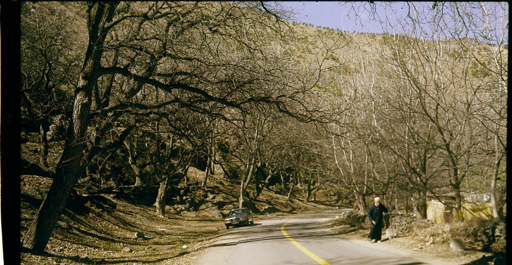 Landstraße führt durch einen Wald